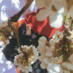 A l'ombre d'un cerisier